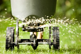 be careful with fertilizing Florida Lawns in Fall image
