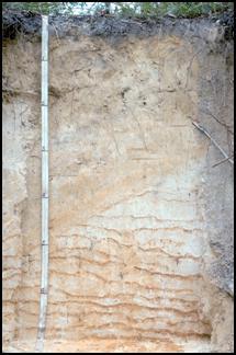 soil pit
