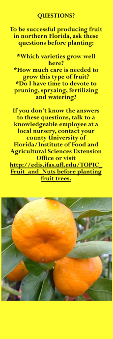 fruit questions