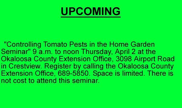 tomato seminar