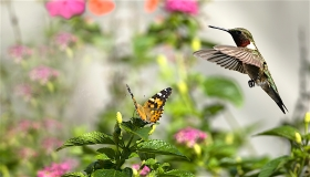 butterfly-and-hummingbird-lg1