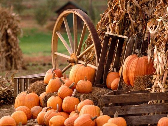 pumpkin-wheel