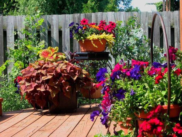 Container-Garden